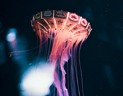 JELLY CAROUSEL