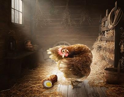 Chicken lays Scottish Egg