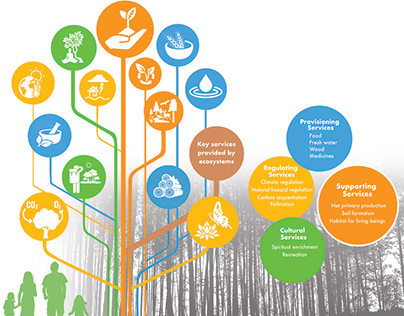 Poster Design for USAID on biodiversity and environment