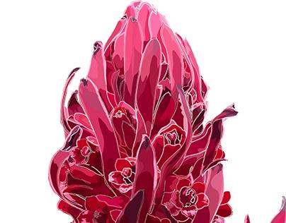 Wildflowers of Sierra Nevada: Parasitic Snowflower