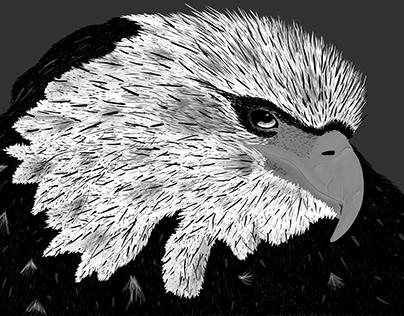 Ilustración de águila
