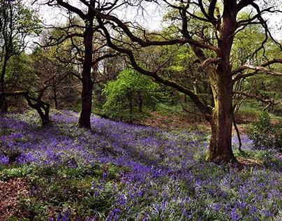 Cranberry Bog & Podmore Woods
