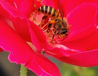 honey bees 🐝