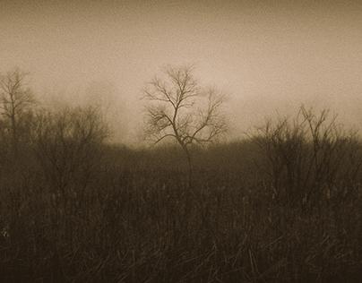 Wisconsin Wetlands Fog