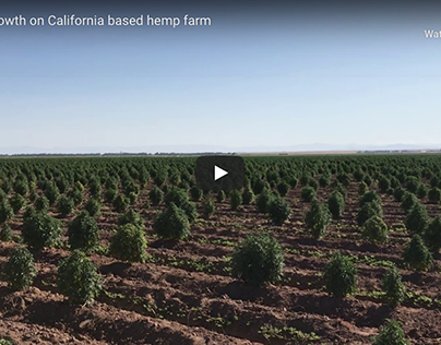 California based hemp farm