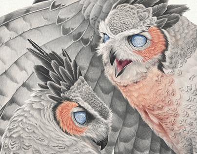 Sanguinary Owl