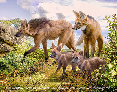 One Earth Project - Lobo Guará (Maned Wolf)