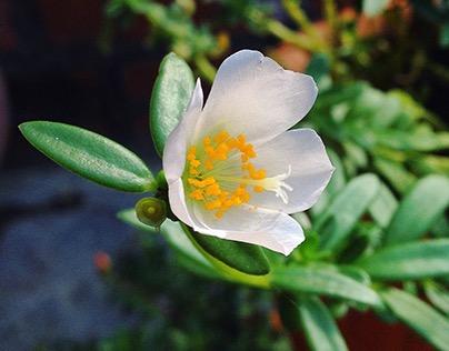 Plantas, flores y mas