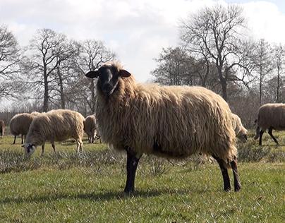 Documentaire 'De Stress van de herder'