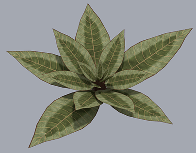 Exagerated and Unique Foliage