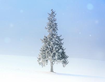 Hokkaido Winter Landscape Photography