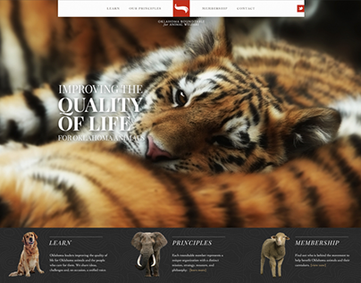 Responsive Website for Animal Welfare