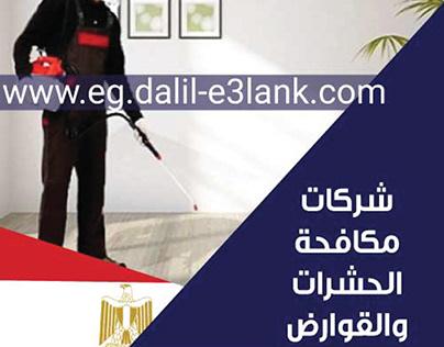 شركة مكافحة الحشرات في مصر