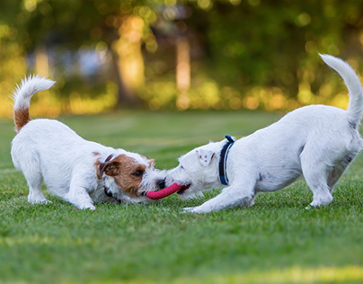 Not playing enough is a common pet-care mistake.