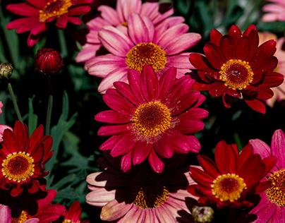 Flowers in quarantine