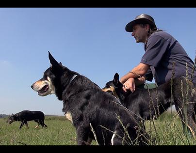 Documentaire: De stress van de herder
