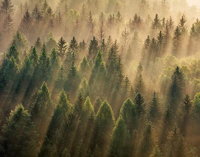 Fog Symphony