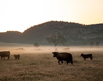 Sierra Foothills Ranching