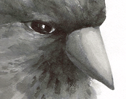 "Illusrations for ""Bird"" fairytale"