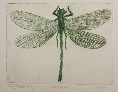 Anisoptera - drypoint
