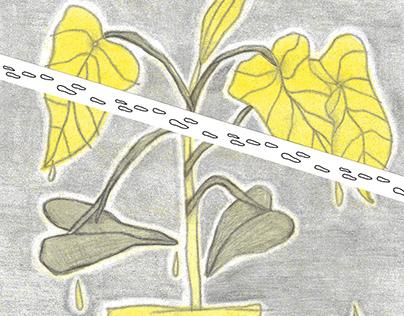 Risografía / Una planta llorando