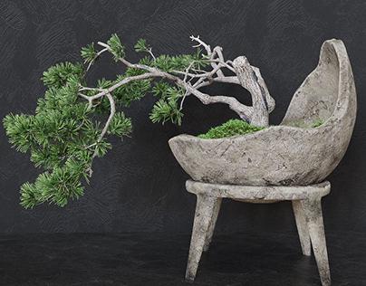 3d model decorative pine tree.