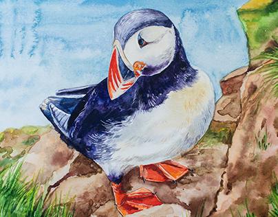 Тупик, акварель | Puffin bird, watercolor