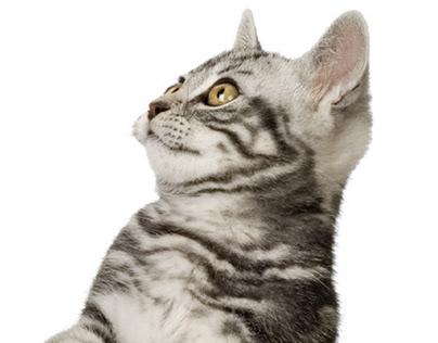 Cat Healthy APP Promo