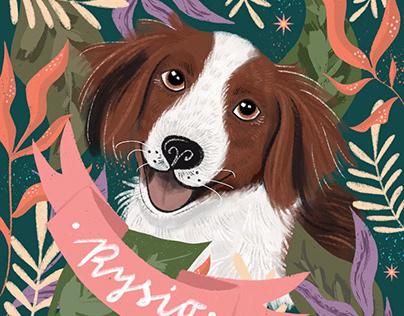 Pet portrait / dog