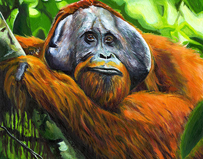 Bornean Orangutan (Color Study)