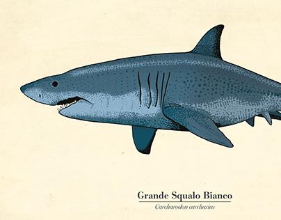 Squali - Sharks