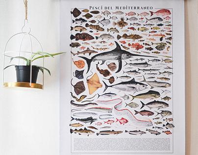 Pesci del Mediterraneo