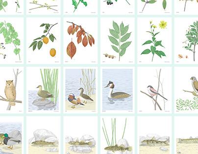 illustrated dictionary of Osan stream plant&animal life