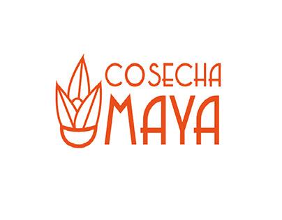 Cosecha Maya/Diseño Gráfico