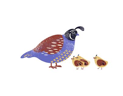 Bird Watching -- Animated Gif