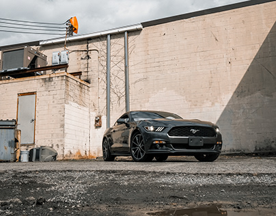 Wild Horses | 2016 Ford Mustang