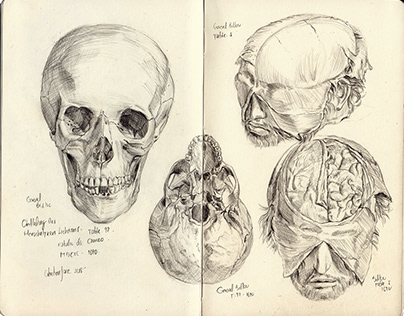 Anatomical Studies and Drawings I