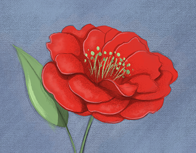 Rose Sketch in Adobe Fresco