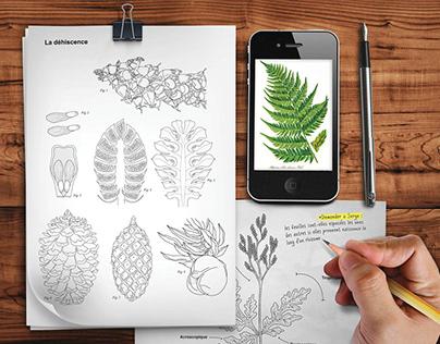 Louis-Marie herbarium