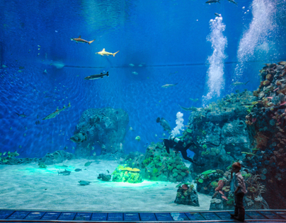 Copenhagen's newest tourist attraction Den Blå Planet