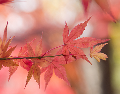 Nature Leaf Photography