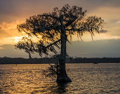 Lake Martin Cypress Preserve Sunset 2-10-2017