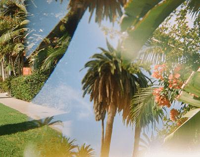 Palm Trees on Film