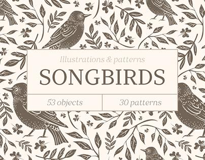 Songbirds. Vector illustrations & patterns