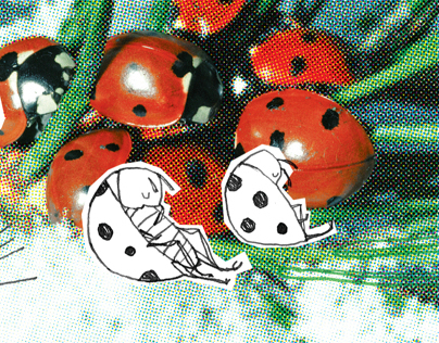 Dobranoc owady, do wiosny! / BOOK