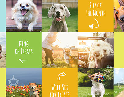 Wagster Treats Website Concept