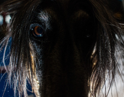 Wag The Dog (2009-2012)