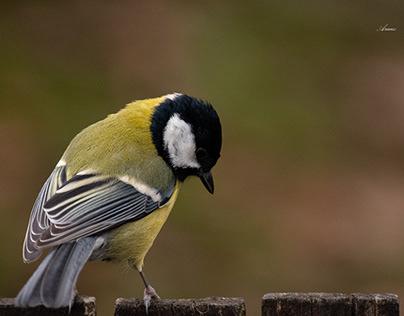 Eurpean Birds part II