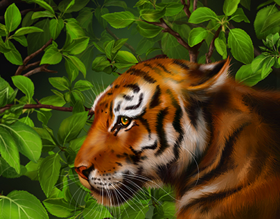 Tiger,part of the illustration for the book