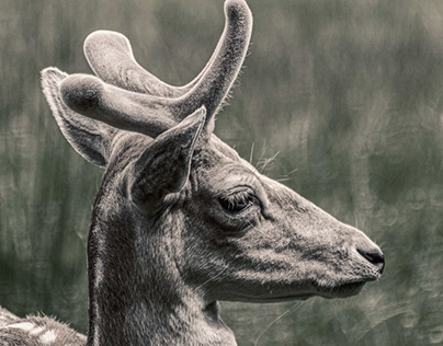 Animal portrait.